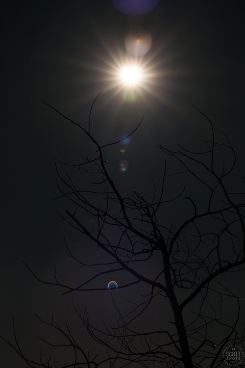 """Solar Eclipse 1"" - Photograph of the solar eclipse above the silhouette of a dead tree. You can't see the eclipse in the sun but you can see it happening in the lens flare at the bottom of the photograph."