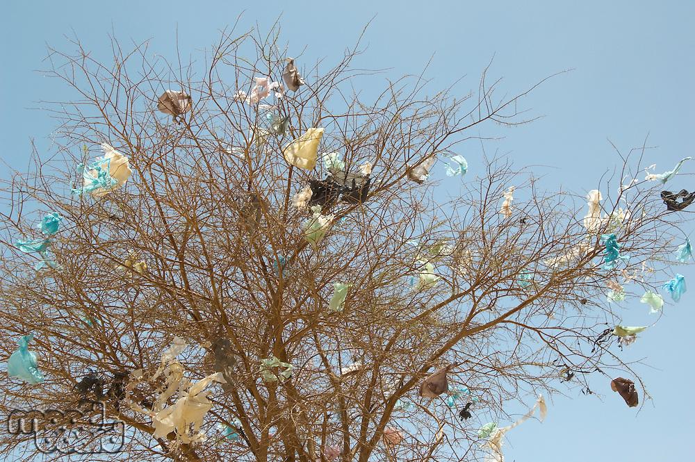 Plastic bags caught in dead tree