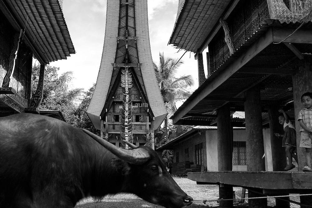 Randan Batu, 11 mars 2012. Ce petit village est composé d'un alignement de greniers à riz, les alang, situés en face de maisons traditionnelles, les tongkonan. A l'arrière plan, sur le pilier central du tongkonan, se trouvent des cornes de buffles sacrifiés lors de célébrations funéraires passées. Il s'agit d'un signe de distinction, témoignant du statut sociale de la famille.