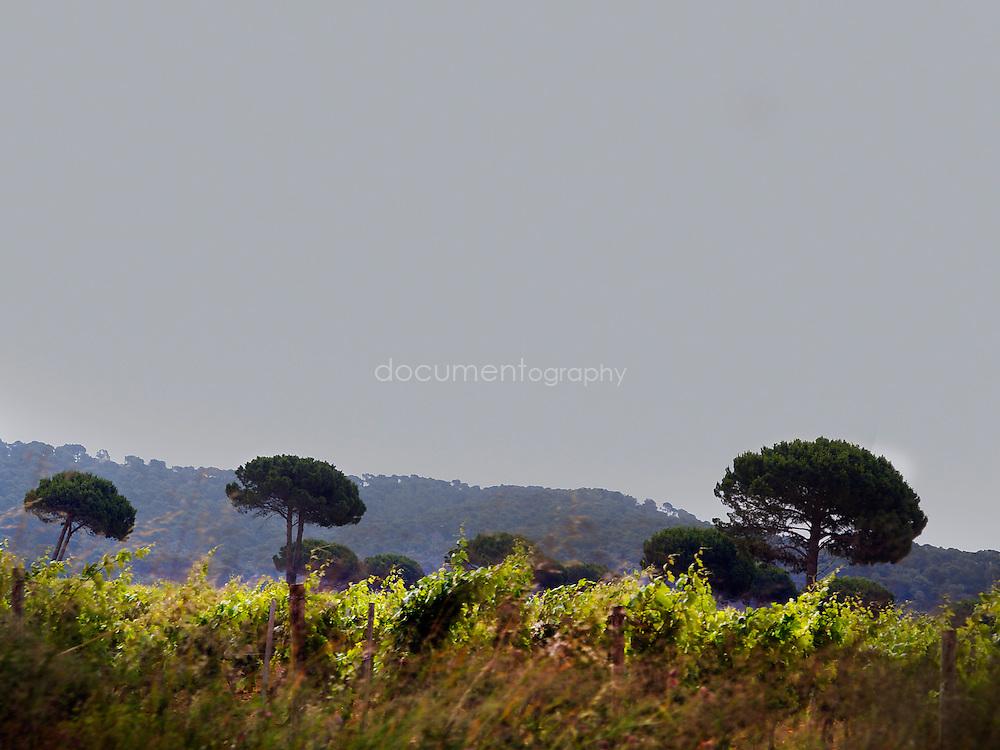 Le terres du Domaine de La Courtade