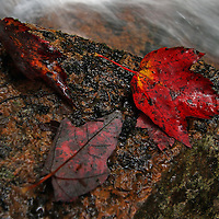 Nature macro photography images of this intimate autumn scenery from the White Mountains in New Hampshire are available as museum quality photography prints, canvas prints, acrylic prints or metal prints. Prints may be framed and matted to the individual liking and decorating needs:<br />