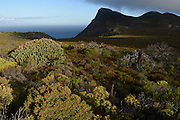 Cape of Good Hope, Table Mountain National Park