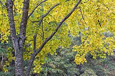 Daingerfield State Park