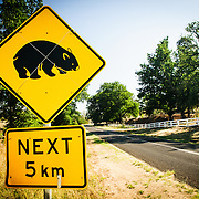 Warning sign cautioning against wombats as a road hazard in the Eagan Peaks National Park in southeast New South Wales, Australia.
