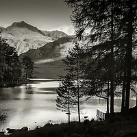 Blea Tarn Pines, Langdale, Lake District, Cumbria