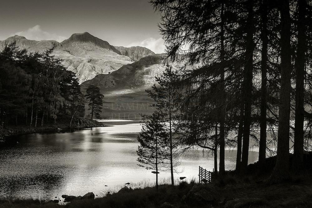 Blea Tarn Pines, Langdale, Lake District, Cumbria