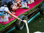 05 JANUARY 2019 - MINBURI, BANGKOK, THAILAND:  A woman feeds a swan along Khlong Saen Saeb, at the Kwan Riam Floating Market in Minburi, east of downtown Bangkok. People gather on both sides of the khlong (canal) between Wat Bamphen Nuea and Wat Bamphen Tai, monks in boats go past them as people present the monks with food, flowers, and other offerings.          PHOTO BY JACK KURTZ