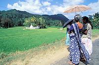 Sri Lanka - Rizières et temple bouddhiste dans le centre de l'île<br /> Rice field - centre of the island - Sri Lanka