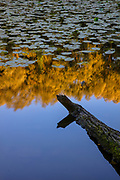 A log points toward the reflection of a forested area on a large pond, partially covered in lily pads, in Parc des Sources, Brussels, Belgium. The public park is known for its numerous springs — called sources, in French — which provide drinking water to the surrounding area. Parc des Sources is one of six major parks that are connected in an ecological corridor in Brussles. In Dutch, Parc des Sources is called Bronnenpark.