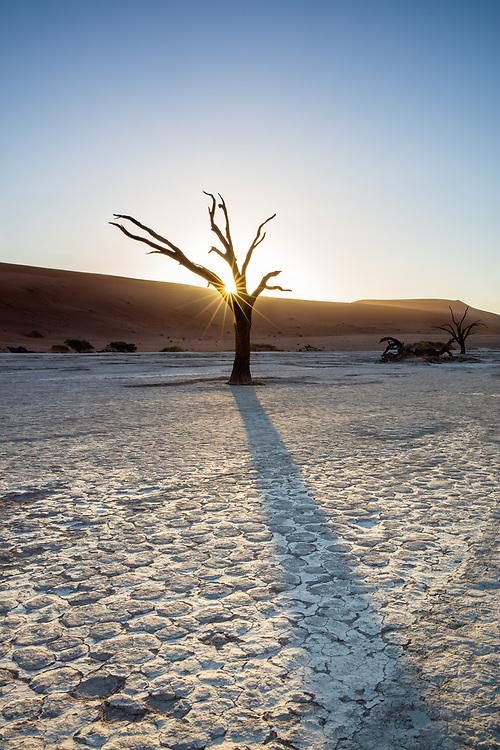 Sun bursr and tree at Deadvlei, Namibia