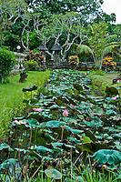 Lotus pond at Pura Taman Ayun near Mengwi in Bali, Indonesia