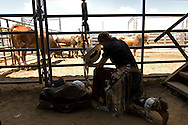 SLUG: Vann Fundraiser-Photo Request 54667-August 21, 2011-Bulverde, Texas-Tristen Dean of Merkel, Texas, takes a few moments to reflect before the bull riding competition at the Tejas Rodeo Sunday, in Bulverde. The event was a fundraiser for the family of slain Sheriff's Dept. SGT. Kenneth Vann
