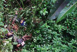 May 28, 2017 - Marawi, Philippines - Unidentified dead bodies are found off a cliff along the highway going to Marawi City. As fighting entered the sixth day, Maute rebel group who entered Marawi have killed  civilians, the military said on May 28. (Credit Image: © Linus G. Escandor Ll via ZUMA Wire)