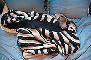 Sugar asleep on the bed and covered in a blanket at 4:30 in the afternoon after 6 days and 5 nights on the road to Oregon