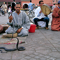 Snake Charmers at Jemaa el Fna in Marrakech, Morocco <br /> An unusual and exciting experience when visiting Jemaa el Fna is watching snake charmers. This trio of a drummer, flutiest and handler orchestrate a dance among Egyptian cobras. Yes, this species is poisonous. However, their venom has been drained and their fangs removed. Expect to pay somewhere between 5 and 20 DH to have your picture taken with the charmers while holding a snake or having it draped around your neck.