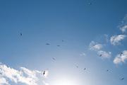 Skyscape 0011