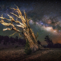 Milky Way over the Ancient Bristlecone Pine Forest in the White Mountains of California.