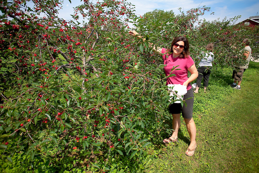 Picking cherries near Fish Creek in Door County, Wisconsin.  Mike Roemer Photo