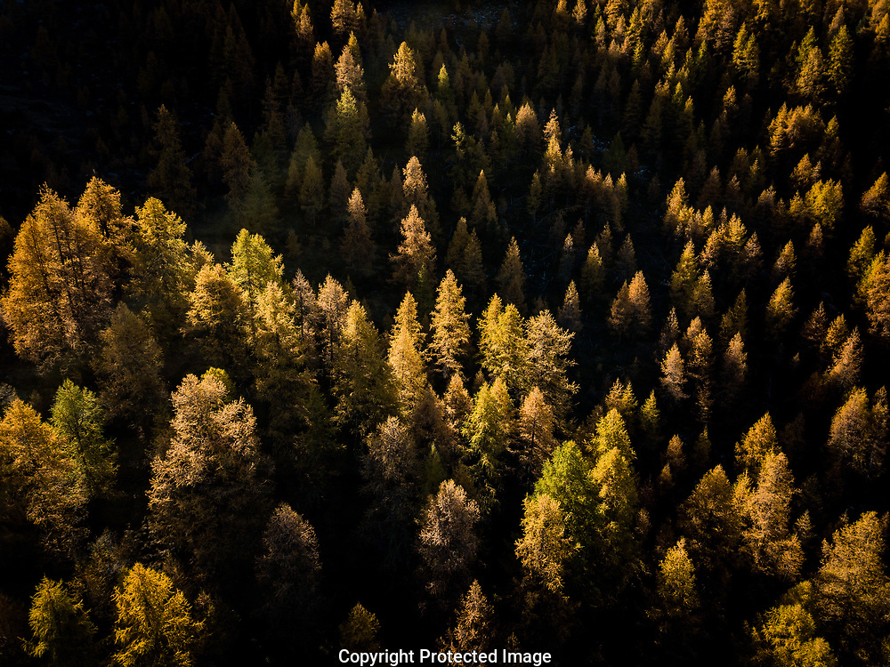 Des M&eacute;l&egrave;zes en montagne vu de haut dans le val d'Herens<br /> (OLIVIER MAIRE)<br /> 2017<br /> VALAIS TOURISME AUTOMNE SUISSE FORET<br /> <br /> mountains Alps Switzerland forest