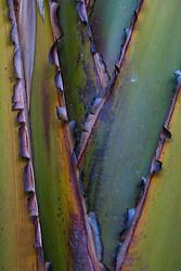 Palm Detail, Sydney, New South Wales, Australia