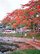 Reservoir in Port Blair, South Andaman Island