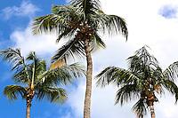 Caribbean, St. John, Virgin Islands, vacation, trees, palm, tree, sky, trio, three, view,