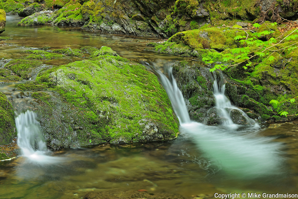 Dickson Falls  in the Acadian forest<br /> Fundy National Park<br /> New Brunswick<br /> Canada