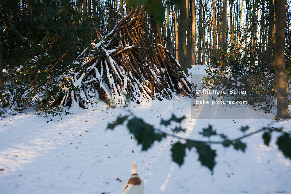 Wood pile, holly branch and disappearing pet dog in English woodland during wintry snows in north Somerset.