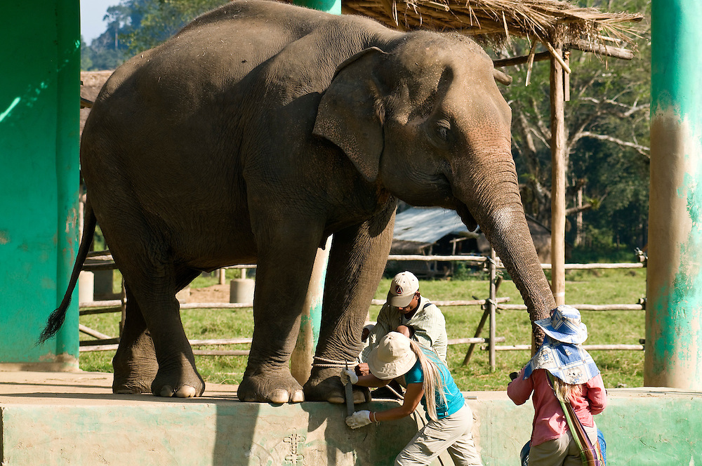 "Carol Buckley (left) and Jody Thomas (right) give an elephant a pedicure at the Elephant Nature Park near Chiang Mai, Thailand.  Sangduen ""Lek"" Chailert founded the park as a sanctuary and rescue centre for elephants.  The park currently has 32 elephants sponsored and supported by volunteers from all over the world."