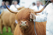 Royal Highland Show 2011