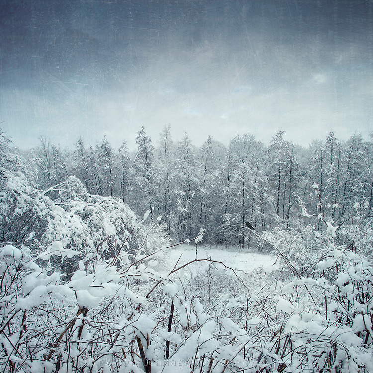 Snow covered trees<br /> <br /> Prints, iPhoneCases &amp; much more:<br /> http://society6.com/DirkWuestenhagenImagery/winterscape-Z1N_Print