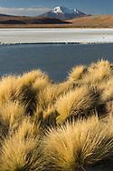 South America, Andes, Altiplano, Bolivia,Laguna Hedionda, Stinky Lagoon, Ollagüe Volcano
