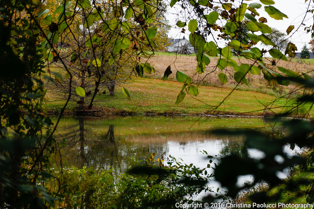 Four season of six acres in Northern Kentucky from 2009 until 2016. (Christina Paolucci, photographer)