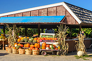 Sep's Farms, East Marion, NY