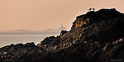 Two amorous Oystercatchers courted on the crag whilst an old face looks out over timeless seas