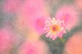 Flower art - Iridescent millennial pink