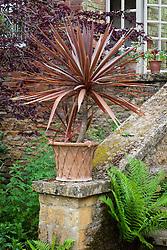 Cordyline in a terracotta pot at Hidcote Manor Garden