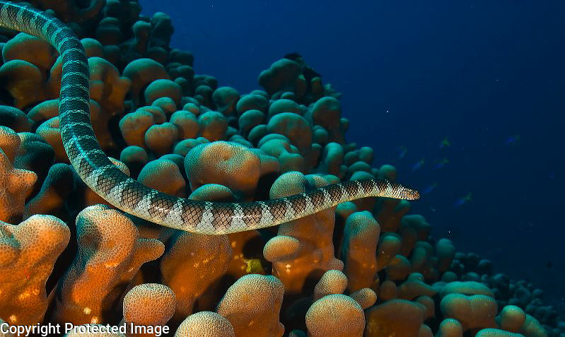 Topside and underwater images from Alor, Banda Sea and Raja Ampat in Indonesia.
