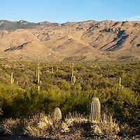 Saguaro National Park, Tucson. Rincon Mountains.