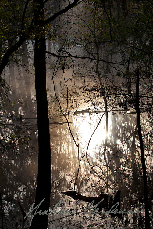Sunrise scene on the Suwannee river in Florida, near the confluence of the Suwannee and the Itchetucknee.
