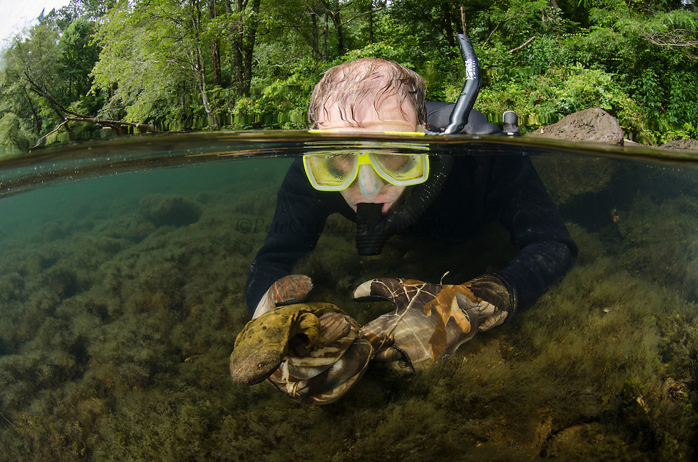 Researcher Stephen Spear & Eastern Hellbender (Cryptobranchus alleganiensis <br /> Hiwassee River, Cherokee National Forest<br /> Tennessee<br /> USA