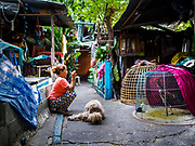 21 MARCH 2017 - BANGKOK, THAILAND: A resident of Pom Mahakan photographs the front of her home, and her fighting cocks, with a smart phone. Like the other residents of the old fort, she is facing eviction by the end of March, 2017. The final evictions of the remaining families in Pom Mahakan, a slum community in a 19th century fort in Bangkok, have started. City officials are moving the residents out of the fort. NGOs and historic preservation organizations protested the city's action but city officials did not relent and started evicting the remaining families in early March.               PHOTO BY JACK KURTZ