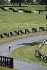2009 Jefferson Cup - 12:30PM races