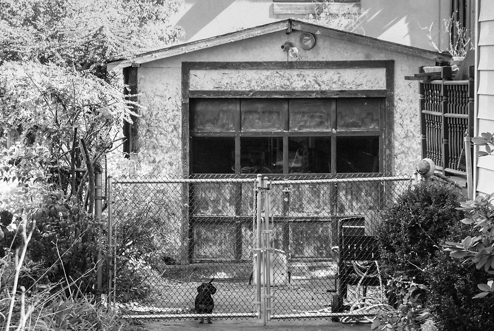 Street photo of little dog in driveway with garage. Hackensack, NJ