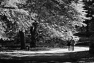 A Romantic couple along the bridle path in Central Park, New York City
