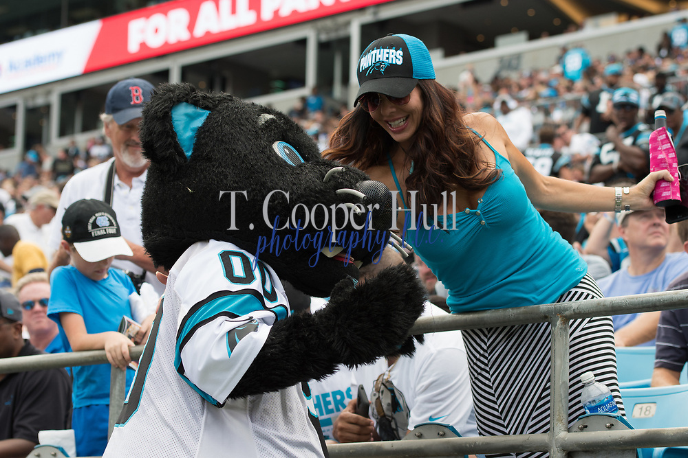 Sir Purr taking selfies with fans in the New Orleans Saints 34 to 13 victory over the Carolina Panthers.