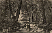 Artist's reconstruction of a carboniferous forest during the time when coal deposits were being laid down.  From 'The Universe' by FA Pouchet (London, 1874). Engraving.