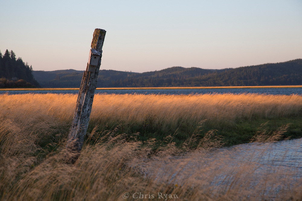 Sunset in the tidal grass, Tokeland, Washington