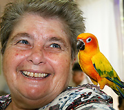 Israel, Rehovot, Old age day care centre pensioner taking care of a pet parrot as part of their daily activities