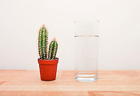 Cactus houseplant next to a full glass of water